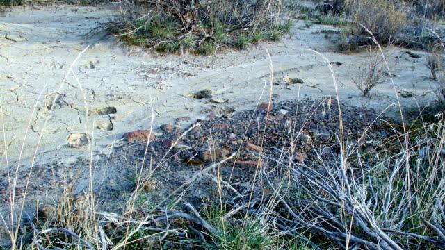 pronghorn antelope tracks dry stream mud painted hills oregon 12 - hügelkette stock-videos und b-roll-filmmaterial
