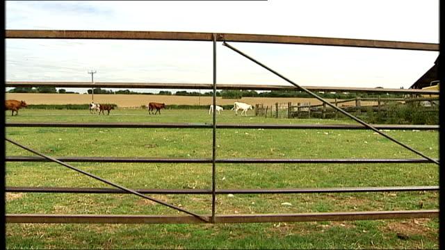 vídeos y material grabado en eventos de stock de consultation deadline approaches england warwickshire kenilworth ext paul hunt along amongst cows in field hunt along past cows as moo heard sot... - castillo kenilworth