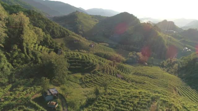 Prosecco Hügeln