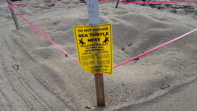 protected sea turtle nests are roped off on fort lauderdale beach. - roped off stock videos & royalty-free footage