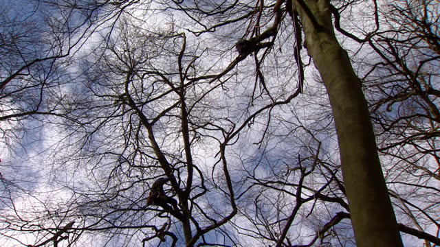 protesters at jones hill wood, buckinghamshire, including in tree, to stop workers clearing part of the ancient woodland for work on hs2 high speed... - tree area stock videos & royalty-free footage
