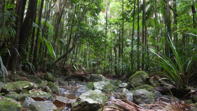 vídeos de stock, filmes e b-roll de os protestors caem no parque nacional do nightcap perto de lismore, nsw, austrália - floresta tropical