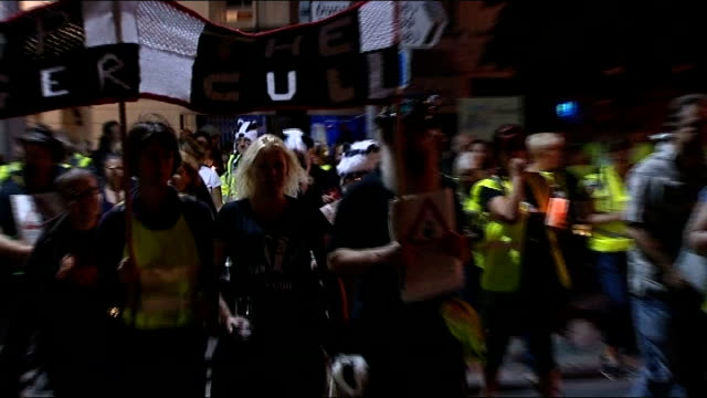 protests continue over government plans to cull badgers demonstration in minehead england somerset minehead gvs demonstrators along road in night... - minehead stock videos & royalty-free footage