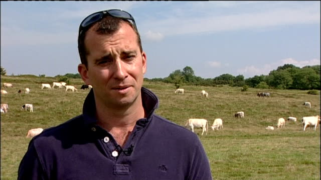 protests continue over government plans to cull badgers mendip hills day cows in fields pan left reporter to camera james small interview sot... - minehead stock videos & royalty-free footage