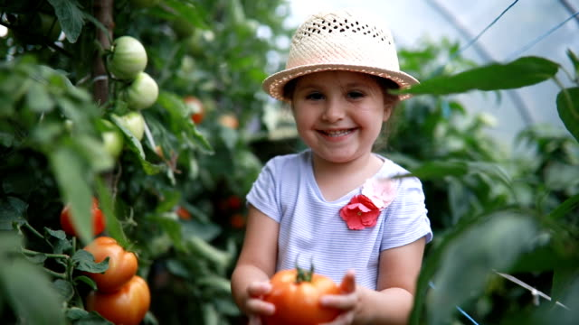 vídeos de stock e filmes b-roll de proud child holding her first grown tomato - quinta