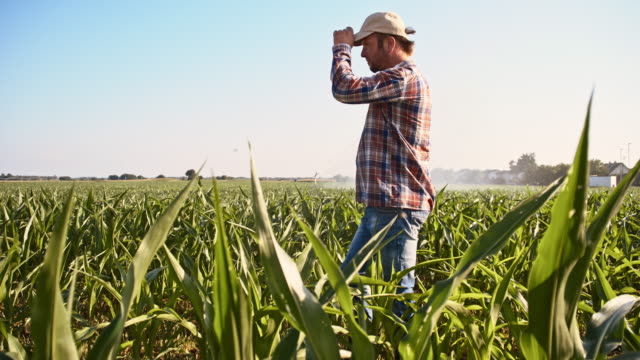 slo mo proud farmer in the field - plaid shirt stock videos & royalty-free footage