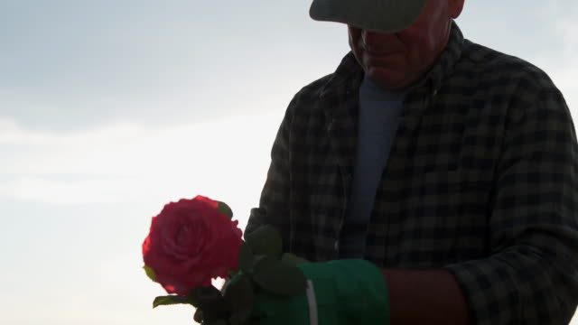 proud of my plants - gardening glove stock videos & royalty-free footage