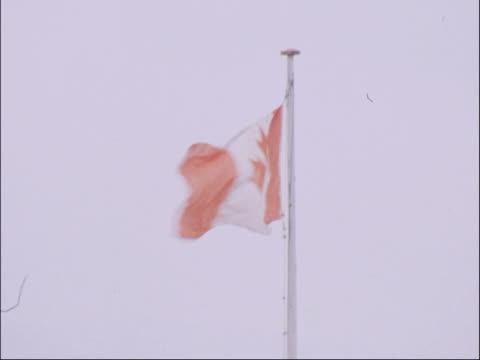 vidéos et rushes de england vs canada; england: manchester: old trafford: ext two canadian cricketers out onto pitch tariq javed rubbing hands pull out canadian flag... - symbole