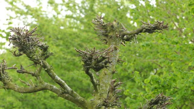 pruned tree in garden. - annick vanderschelden stock videos & royalty-free footage