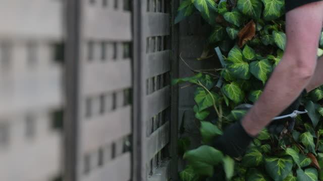 pruning ivy - secateurs stock videos & royalty-free footage