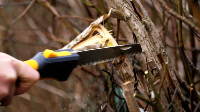 pruning of branches. saw and secateurs. blowing wood shavings. version 1 - pruning stock videos & royalty-free footage
