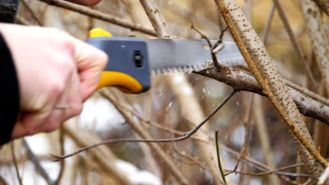 pruning of branches. saw and secateurs. blowing wood shavings. version 2 - limb body part stock videos & royalty-free footage