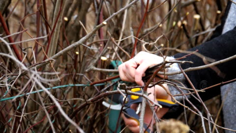 pruning of branches. saw and secateurs. blowing wood shavings. version 3 - pruning stock videos & royalty-free footage