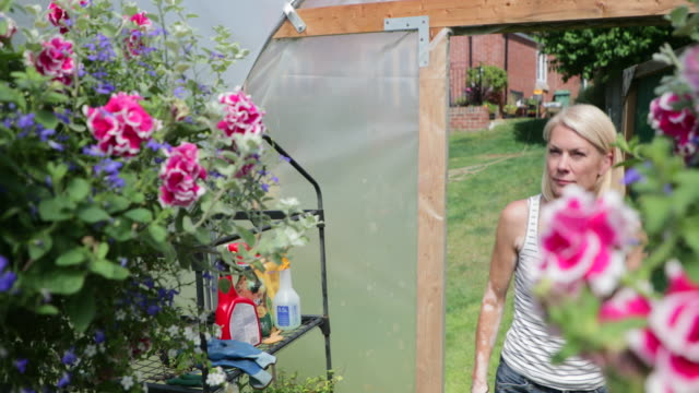 pruning the flowers on her hanging baskets - vest stock videos & royalty-free footage