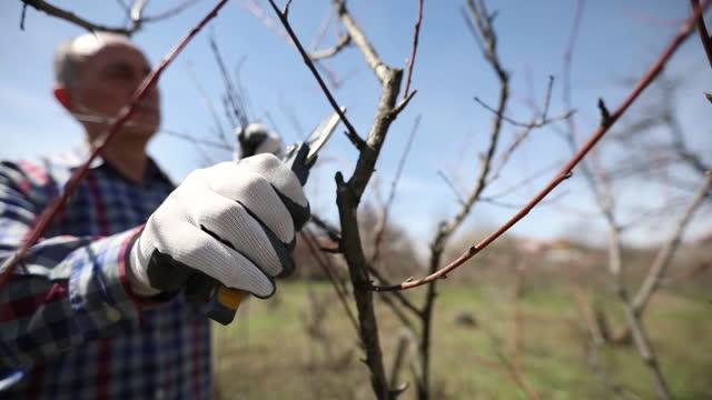 beskära fruktträdet - beskära bildbanksvideor och videomaterial från bakom kulisserna