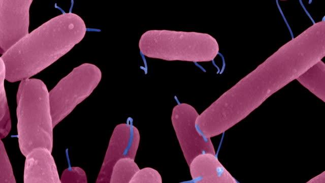 pseudomonas aeruginosa, enteric, sem - micro organism stock videos & royalty-free footage