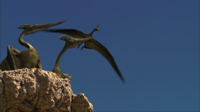 CGI, MS, LA, Pterosaurs landing on rock