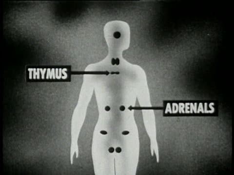 vidéos et rushes de 1953 puberty and sexual development - 15 of 21 - anatomie