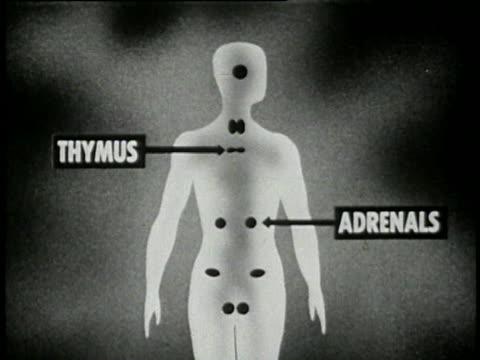 vidéos et rushes de 1953 puberty and sexual development - 15 of 21 - anatomie