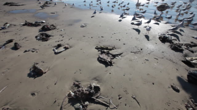 Public beach full of garbage and birds