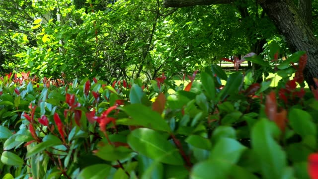 public park behind the hedge - hedge stock videos & royalty-free footage