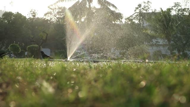 public park in summer - karachi stock videos & royalty-free footage