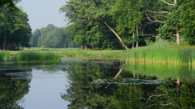 public park, netherlands - utrecht stock videos & royalty-free footage