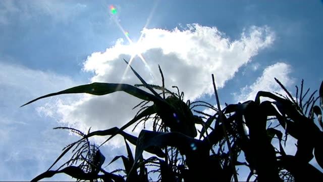 london councils face tough decisions close ups of crops and marrow growing on allotment - gemeinschaftsgarten stock-videos und b-roll-filmmaterial