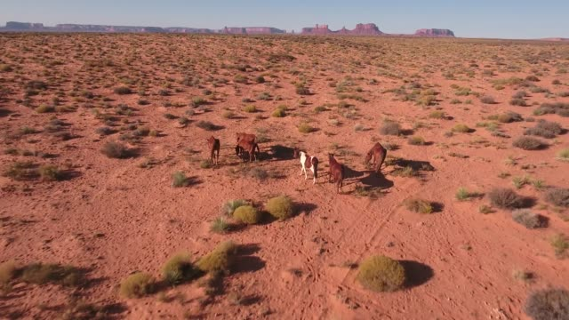 pull away and lower pan down wild horses, drone aerial 4k, monument valley, valley of the gods, desert, cowboy, desolate, mustang, range, utah, nevada, arizona, gallup, paint horse .mov - paint horse stock videos & royalty-free footage