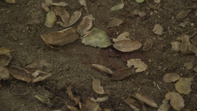 pull back from blood and tracks on ground. could be footprint. dirt and leaves. investigation. - fußabdruck stock-videos und b-roll-filmmaterial
