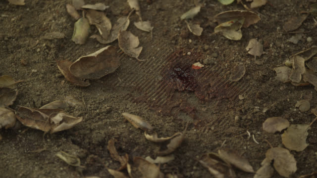 stockvideo's en b-roll-footage met pull back from blood and tracks on ground. could be footprint. dirt and leaves. investigation. - minder dan 10 seconden