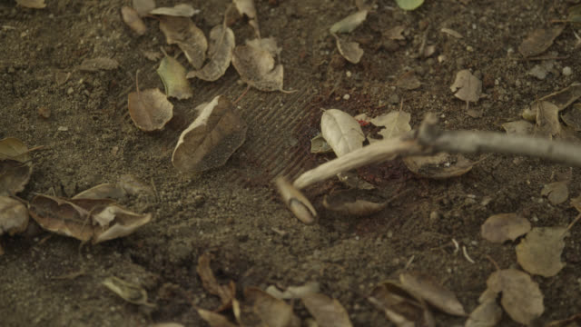 pull back from blood and tracks on ground. could be footprint. dirt and leaves. investigation. - blood stock videos & royalty-free footage