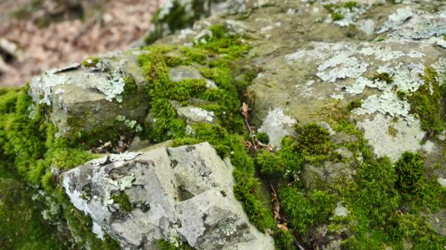 pull back on moss covered rock - 地衣類点の映像素材/bロール