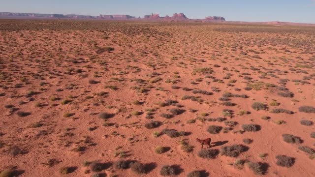 pull back reveal wild horses, drone aerial 4k, monument valley, valley of the gods, desert, cowboy, desolate, mustang, range, utah, nevada, arizona, gallup, paint horse .mov - paint horse stock videos & royalty-free footage