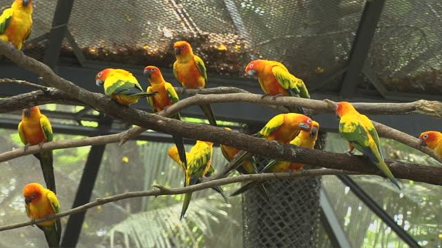 pull back shot sun parakeets safari world bangkok thailand - 捕らえられた動物点の映像素材/bロール