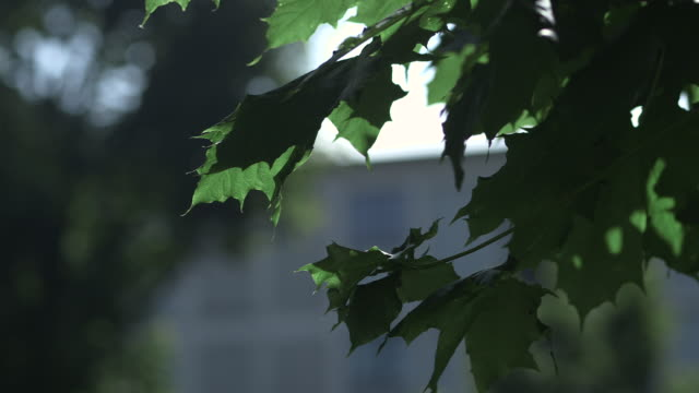 pull focus between green leaves and the exterior of an apartment building at drancy, a complex where thousands of jews were interned and deported from during wwii, ile-de-france, france. - prison window stock videos & royalty-free footage