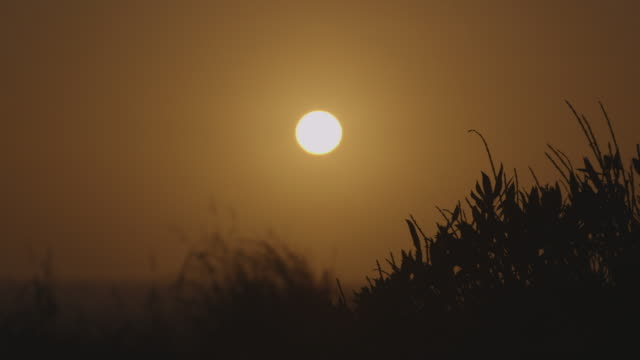 pull focus between the sun and silhouetted grass - coastline stock videos & royalty-free footage