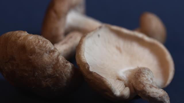 pull focus close shot on shitake mushrooms. - shiitake stock videos & royalty-free footage