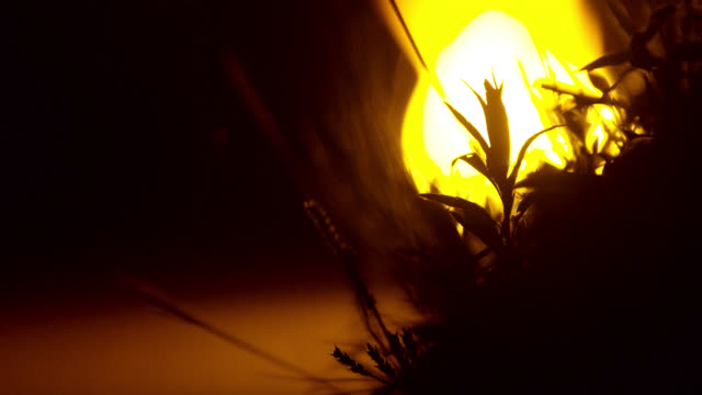pull focus from plant to candle, japan. - bamboo plant stock-videos und b-roll-filmmaterial
