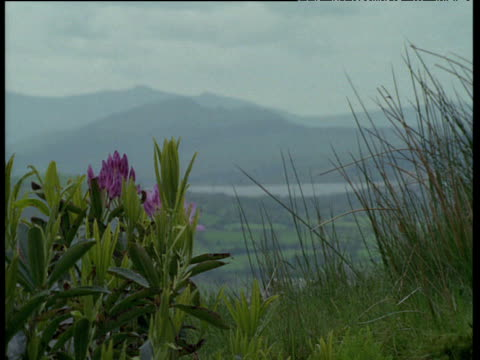 pull focus from rhododendron to misty valley, wales - wales stock videos & royalty-free footage