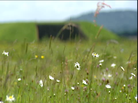 Pull focus from wild flower meadow to disused nuclear missile silo