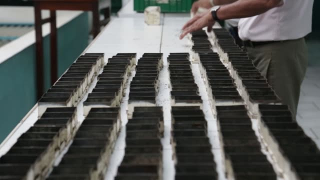 pull focus into boxes of tea during grading in the tasting room at the mjf holdings ltds dilmah tea headquarters and factory in the peliyagoda area... - caffeine molecule stock videos & royalty-free footage