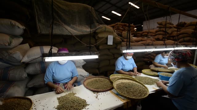 vídeos de stock, filmes e b-roll de pull focus into raw coffee beans at taman delta indonesia coffee factory in semarang, indonesia on thursday, march 12 workers select raw coffee... - raw footage