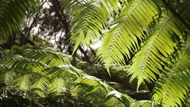 pull focus, new zealand foliage - tropischer regenwald stock-videos und b-roll-filmmaterial