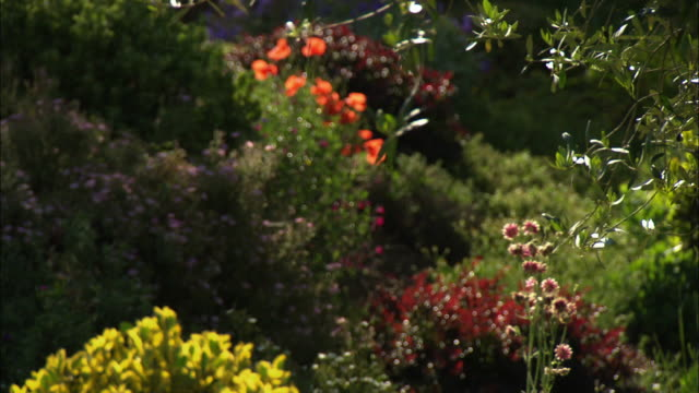 """pull focus of colourful garden, red, orange, yellow, green, purple plants"" - rustic stock videos & royalty-free footage"