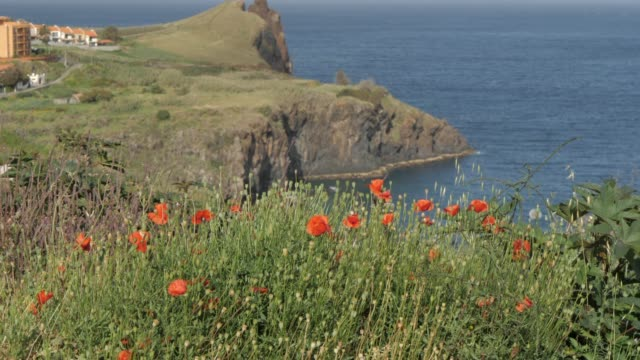 pull focus of poppies to rocky coastline near canico, madeira, portugal, atlantic, europe - madeira stock videos and b-roll footage