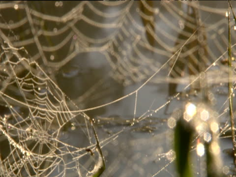 pull focus on partially broken spider's web covered in dew kerala - クモ類点の映像素材/bロール