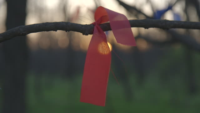 Pull focus on ribbons tied to a tree branch.