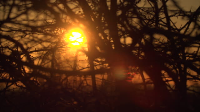 pull focus on sunrise through branches of tree mansfield - sky stock videos & royalty-free footage