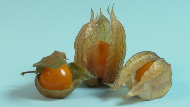 Pull focus on three physalis fruit arranged against a plain blue background.